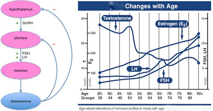 Male Hormone Chage