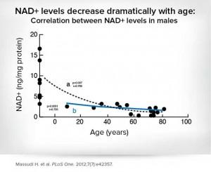 NAD-levels-decrease