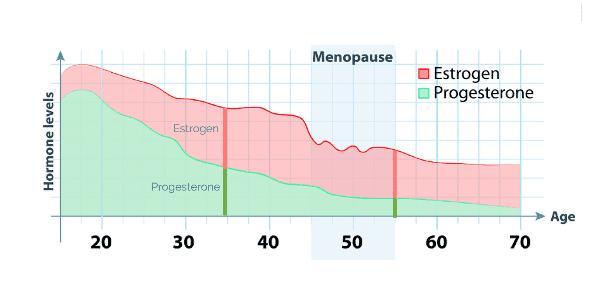 woman hormone level